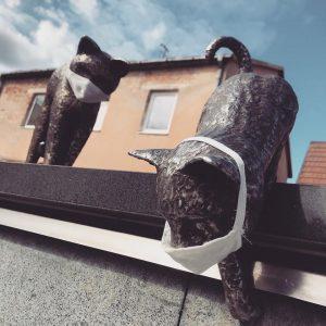 Katinukai žino, o tu ar žinai?